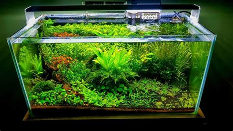 How To Set Up An Aquascape by Aquascaping For Beginners Step By Step Guide