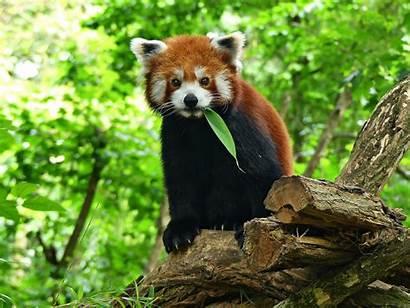 Panda Wallpapers Photoshoot