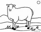 Sheep Coloring Schaf Printable Cool2bkids Ausmalbild Ausmalbilder sketch template