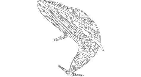 arctic colouring pages canadian museum  nature