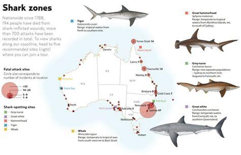 deadly shark attacks  australia  timeline australian