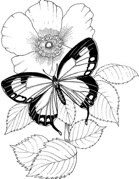 coloring sheets,butterfly coloring pages, butterflies coloring | Butterfly coloring page, Flower