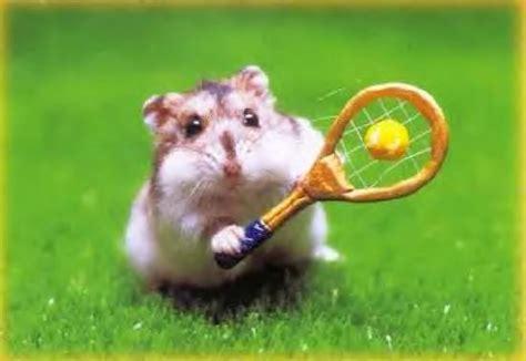 des hamsters marrants le nonocaf 233