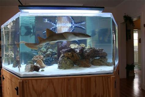 shark tank home aquarium fish shark tank and sharks