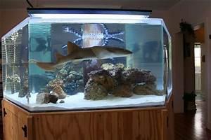 Süßwasserfische Fürs Aquarium : shark tank tanked saltwater pinterest fische ~ Lizthompson.info Haus und Dekorationen