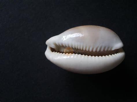 Las conchas que no vaticinan las cosas importantes