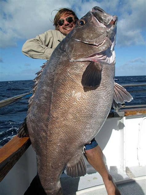 fish caught catfish boat