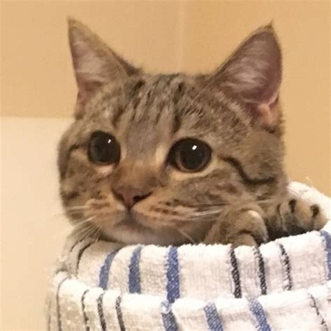 funny cats  tumblr