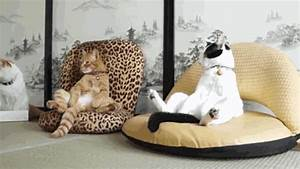 Tag For Lustige katzen Litle Pups