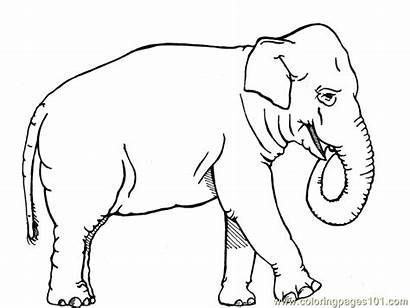 Coloring Elephant African Pages Animals Printable Animal