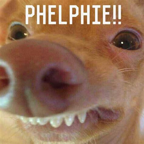 Stephen Dog Meme - image gallery stephen dog