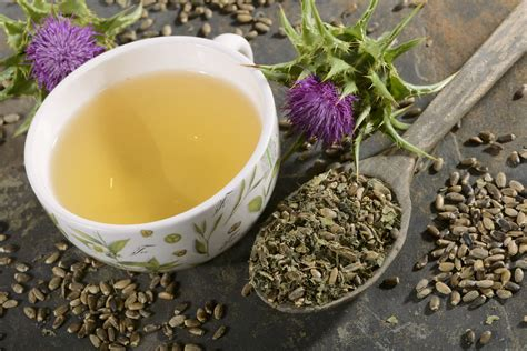 Milk Thistle Uses Health Benefits And Side Effects