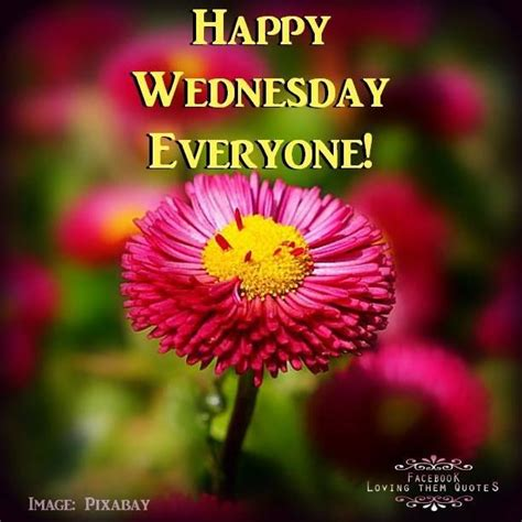 Images Of Happy Wednesday Happy Wednesday Everyone Pictures Photos And Images For