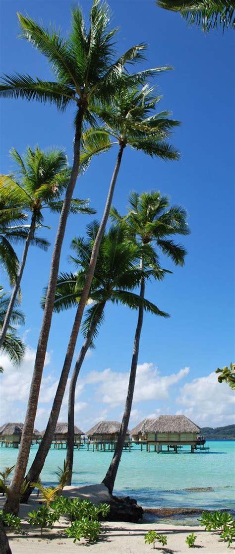 Bora Bora Next Trip ️ Pinterest Bora Bora