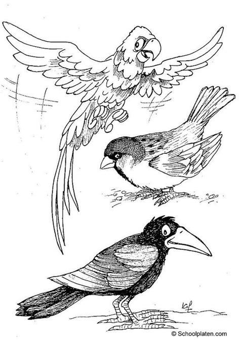 einheimische vögel bilder malvorlage v 195 182 gel ausmalbild 2887 images