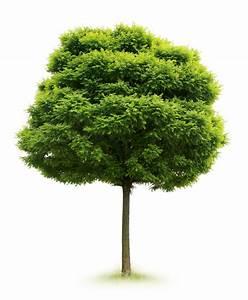 Glendale Civic Trees :: Glendale