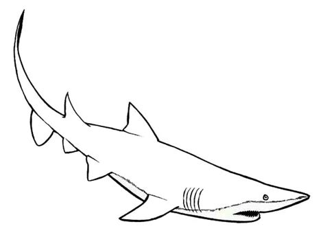 mako template mako shark pages coloring pages