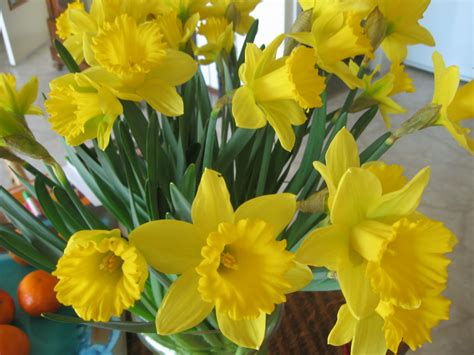 bulb flowers how to force flower bulbs garden guides