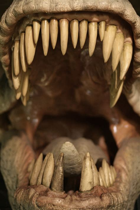 dinosaur mouth  natural history museum  dinosaurs exh flickr