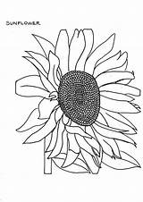 Sunflower Coloring Fading Pages Drawing Getdrawings Colornimbus sketch template