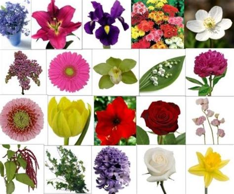 30 Flower Pictures And Names List Pelfusioncom