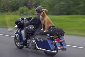 dog riding a motorcycle - Daily Picks and Flicks