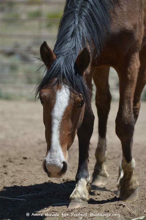 urgent  hay  feed young wild horses rescued