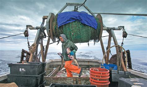 Elijah Voge Meyers Carries Cod Caught In The Nets Of A