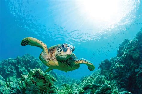 Sea Turtles In Peril
