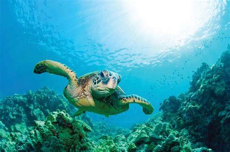 Sea Turtles In Peril Earthjustice