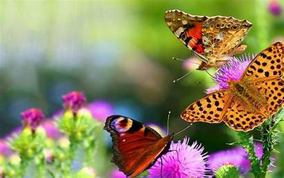 Butterflies Flowers Butterfly Nature Wallpapers Background Colorful