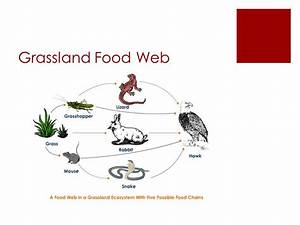 Savannah Food Web Related Keywords - Savannah Food Web ...