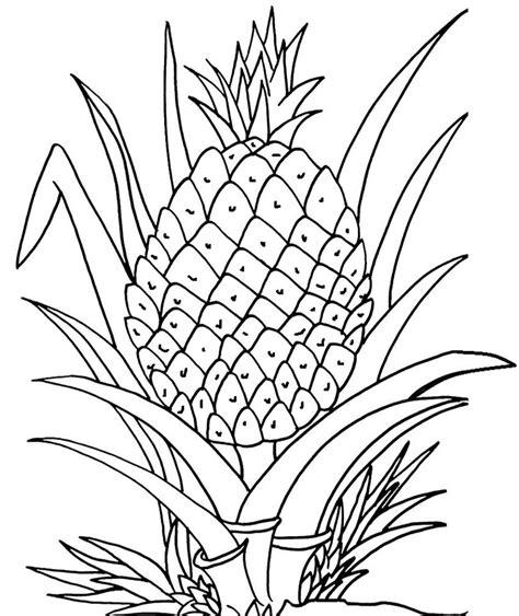 contoh gambar gambar mewarnai pohon pepaya
