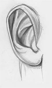 Ear Line Drawing At Paintingvalley Com