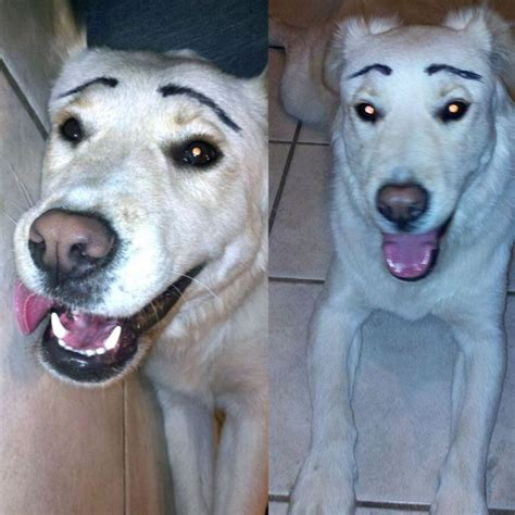dogs  painted fake eyebrows vuingcom