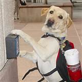 Images of Service Dogs In Hospitals