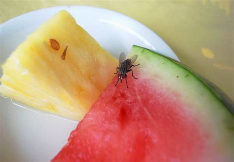How to Make a Fruit Fly Trap   Bob Vila Radio   Bob Vila
