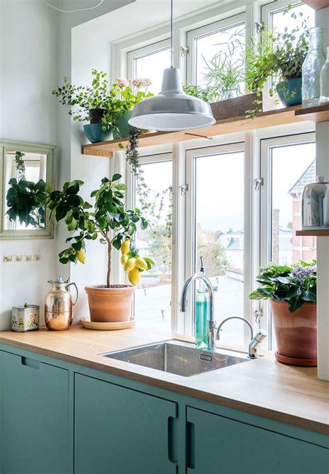 plante cuisine decoration 8 ères de sublimer la cuisine grâce aux plantes