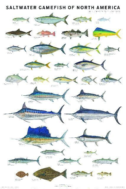 saltwater game fish  north america poster hunting