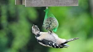Vogelfutter Für Wildvögel : meisenkn del artgerechte f tterung f r wildv gel ~ Michelbontemps.com Haus und Dekorationen