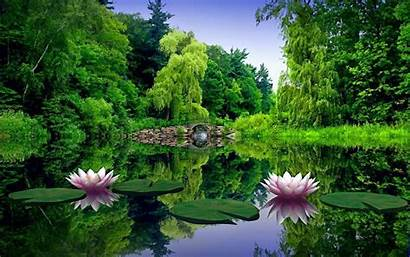 Nature Wallpapers Whole Touch Flower Makes Lotus