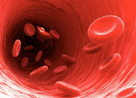 improve blood circulation selfcarer