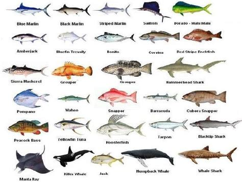pin  costa rica fishing