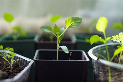 growing flowers indoors 5 secrets to growing gorgeous plants indoors
