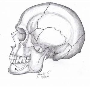 Skull Drawing by AureliaDominiqueVida on DeviantArt
