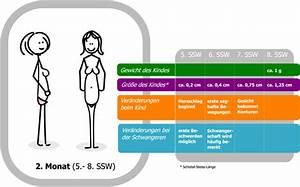 8 Monat Ssw : 8 schwangerschaftswoche 8 ssw embryo schwangerschaft schwangerschaftstest ~ Frokenaadalensverden.com Haus und Dekorationen