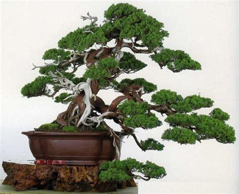 ciri ciri karakteristik tanaman bonsai