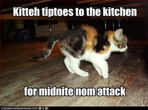 Nom Meme - midnite nom attack kitten cat meme funny animals pinterest cats the o jays and cats humor