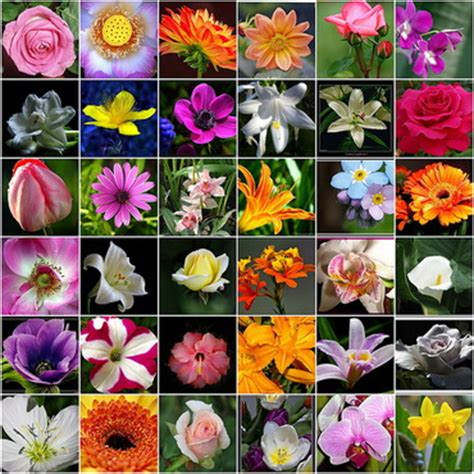 all types of flowers 30 flower pictures and names list