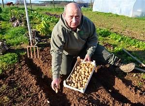 Période Pour Planter Les Pommes De Terre : pommes de terre jacky la main verte ~ Melissatoandfro.com Idées de Décoration